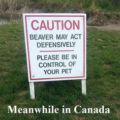 Angry beavers,, lol,, good sign to hang in nightclubs and bars,,