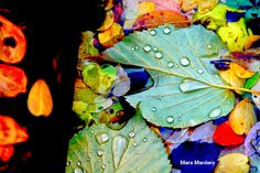 ART'é FvG blog: Gocce di pioggia