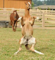 What the heck?! #horses