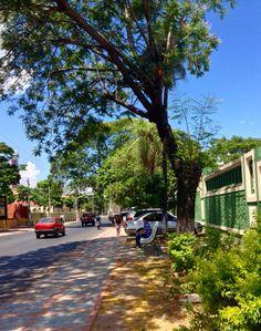 Árbol y banco .Asunción-Paraguay