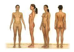 Nude female anatomy porn agree