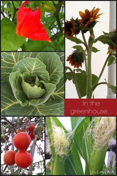 In the greenhouse...November 15, 2014