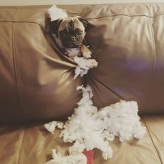 We couldn't find him. Funny Dog Photos, Funny Animal Pictures, Funny Dogs, Funny Animals, Cute Animals, Animal Pics, Cute Puppies, Dogs And Puppies, Doggies