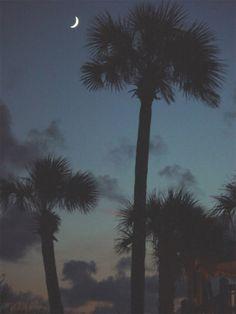 Palmetto Tree and Crescent Moon - Charleston South Carolina SC
