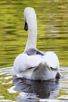 """Baby on board..."" 2 by JeRo Fotografie on 500px"