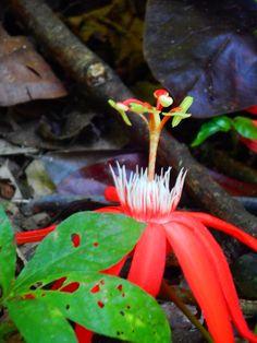 Corcovado nationalpark Costa Rica