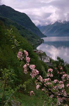 Spring blossom in Hardangerfjord, Norway