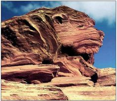 animal face in rock