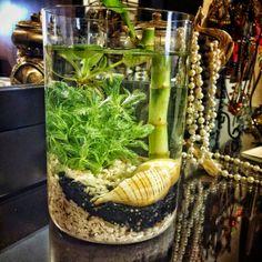 Plantas acuaticas, flotantes y palo de agua