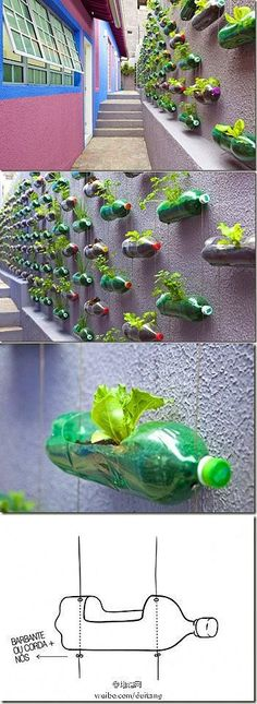 DIY-hanging garden from old soda bottles. Recycle and Garden at the same time.