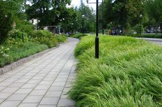Almbacken: Hakonechloa macra - hakonegräs
