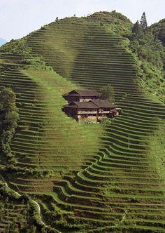 Long sheng Rice Terrace