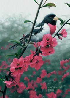 Rose-breasted Grosbeak painting by Mark Mueller