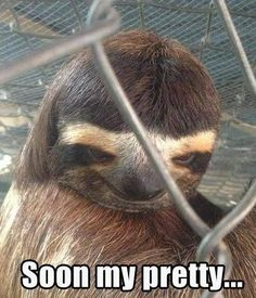 sloth-creepy.jpg 380×444 pixels