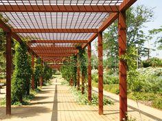 Estructura de malla metálica sobre pérgola para plantas trepadoras