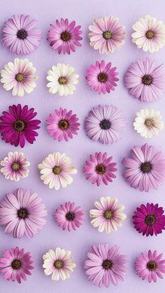 Iphone Wallpaper Purple Flower, Daisy Wallpaper, Flower Background Wallpaper, Purple Backgrounds, Wallpaper Iphone Cute, Flower Backgrounds, Aesthetic Iphone Wallpaper, Wallpaper Backgrounds, Daisy Background