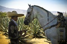 Charro en Tequila, Jalisco. This was my dad exactly, Mexican Cowboy, back in his days in Mexico on his Tequila/Agave Ranch.