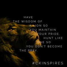 Be wise.  Plan your hunt.  Don't react in haste  Be strong in character always #lion #lionking #inspiration #entrepreneur #motivate #getstrong #hunter #ckinspires