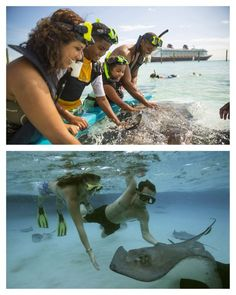 On Castaway Cay – Disney Cruise Line's private island paradise – you can feed, touch and snorkel with stingrays in a private lagoon at Castaway Ray's Stingray Adventure. This up-close encounter also includes a fun info session led by a marine specialist with interesting stingray facts.