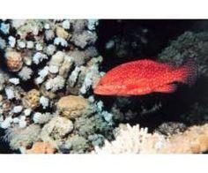 Aqua World Exports Private Limited Aquarium Fish For Sale, Turtle, Pets, Animals, Turtles, Animales, Animaux, Tortoise, Animal
