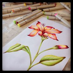 Flower illustration by @marinabarbato