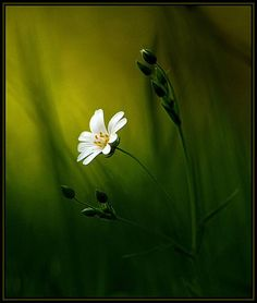 Stitchwort and Grasses - Pixdaus