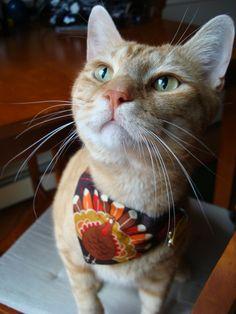This is adorable! Cat bandana Thanksgiving - Turkey handkerchief - cat neckerchief. $5.00, via Etsy.
