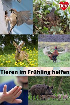 Fuchs Baby, Flower Crafts, Spring Flowers, Wildlife, Animals, Animales, Grey Heron, Animaux, Animal