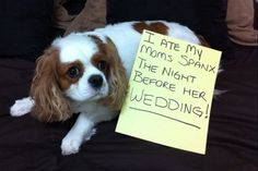 dogshaming...hahah the funniest website!!! @Jenna Waldo you would highly appreciate this!