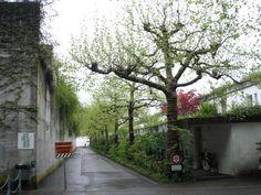 Portfolio: Siedlung Halen, Herrenschwanden, Berne,1955-61, Atelier 5.