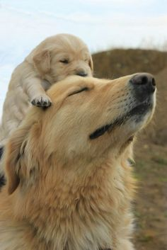 All mothers are the same. Even in the canine world - @nismitega1984