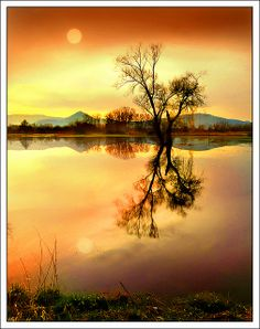 Tree on water, Sélestat, Alsace, FR - Jean-Michel Priaux
