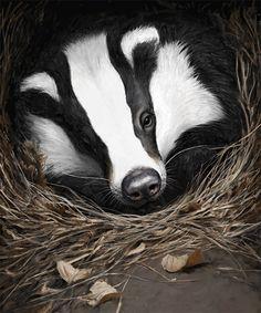 Kuvitus: Tom Björklund Sketch Head, Badger, Toms, Illustration Art, Presentation, Painting, Ideas, Animales, Illustrations