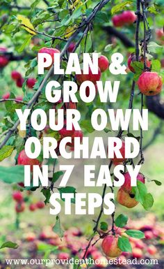 Do you love the idea of overflowing fruit trees in your own orchard? Planting fruit trees and orchard care takes time and effort, but it will be worth it. #orchardcare #fruittrees #gardening #homesteading