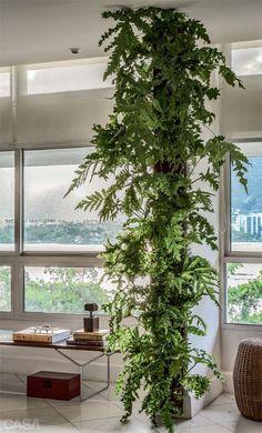 Verde dentro de casa