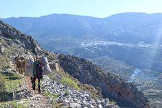 Donkey rush hour at the path of Tholaria village. Après la récolte des olives… heure de pointe sur les sentiers d'Amorgos. 