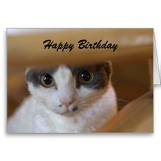 =>Sale on          Birthday Wishes Card           Birthday Wishes Card We have the best promotion for you and if you are interested in the related item or need more information reviews from the x customer who are own of them before please follow the link to see fully reviewsShopping          ...Cleck See More >>> http://www.zazzle.com/birthday_wishes_card-137722711085401122?rf=238627982471231924&zbar=1&tc=terrest