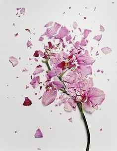 "Jon Shireman ""Broken Flowers"" Shireman soaked flowers in liquid nitrogen, then used a spring-loaded device he made himself to catapult the flowers onto a white surface to break and shatter the petals. Liquid Nitrogen, Collage, Floral Photography, Backlight Photography, Photography Composition, Mountain Photography, Photography Aesthetic, Conceptual Photography, Sunset Photography"