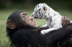 A 15 legédesebb állatbarátság