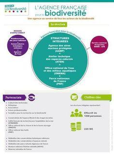 @Ministere_DD #PJLbiodiv : L'agence française pour la biodiversité en infographie