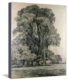 Elm Trees in Old Hall Park, East Bergholt, 1817 Giclee Print by John Constable | Art.com Tree Drawings Pencil, Frame My Photo, Elm Tree, Framed Artwork, Wall Art, Graphite Drawings, Victoria And Albert Museum, Find Art, Giclee Print