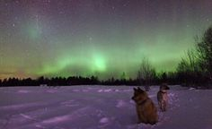 Discover the widest range of Northern Lights holidays to Finland, Norway, Sweden, Iceland and Alaska. Travel with the Northern Lights experts. Northern Lights Holidays, See The Northern Lights, Lapland Holidays, Northen Lights, Favim, Oh The Places You'll Go, Far Away, Safari, National Parks