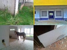 """Em Colniza(MT): Construção Da Creche Do Bairro Castelo Dos Sonhos Está Abandonada; E Creche Passa A """"Ser Frequentada Por Jumento""""."""