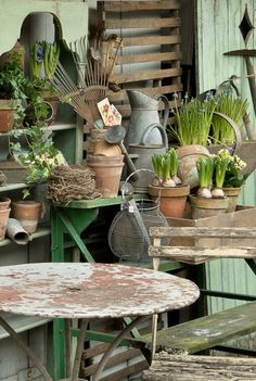 Vignette - potted bulbs, zinc watering can - The Vintage Home Market, thevintagehomemarket.com