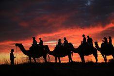 Take a Camel To Sunset Tour