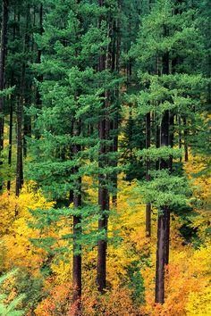 ✮ Oregon - Cascade Mountain Range