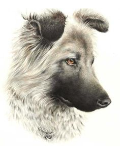 Portrait drawing (20x30cm), made with Caran D'Ache Supracolour soft coloured pencils