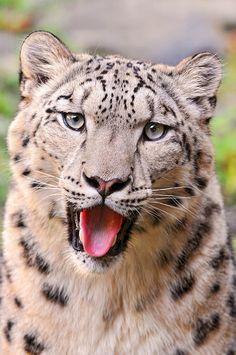 «Do I look cute or dumb like that?» by Tambako the Jaguar, via Flickr