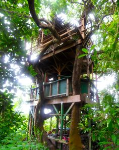 I once saw the movie Swiss Family Robinson.  Since then I've had dreams of owning a ridiculously cool tree house.  Then I saw a Travel Channel special on Tree House resorts.  So....maybe someday?