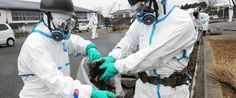 America's West Coast Is Saturated In Fukushima's Radiation, 300 Tons Of Radioactive Waste Continues To Leak Each Day